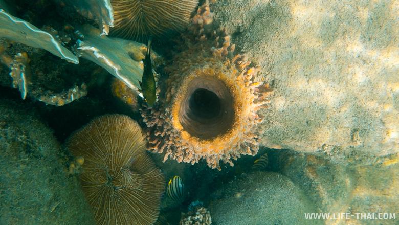 Подводный мир ко Куда