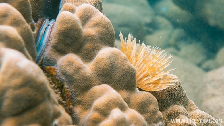 Кораллы в Сиамском заливе