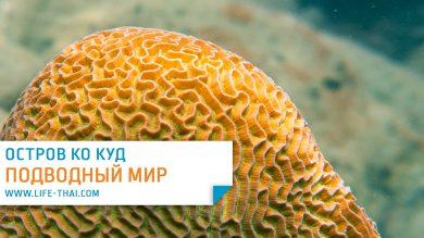 Сноркелинг на ко Куде. Подводный мир острова Куд в Таиланде