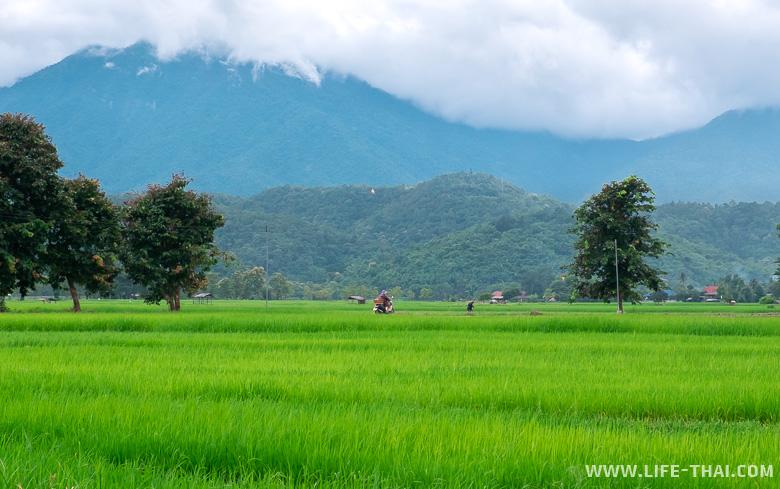 Рисовые поля за Пхаяо - ещё одна достопримечательность