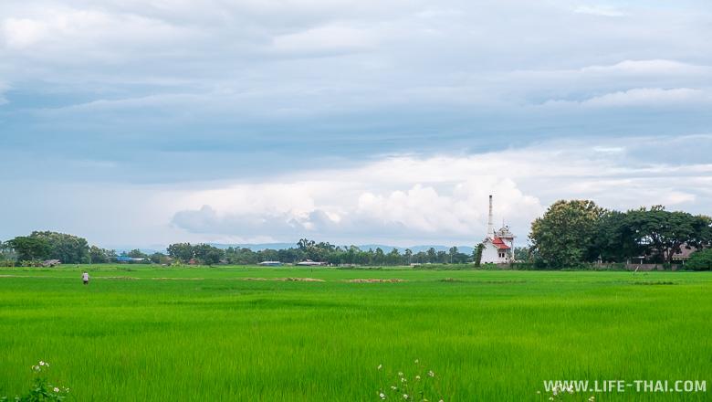 Крематорий в рисовых полях