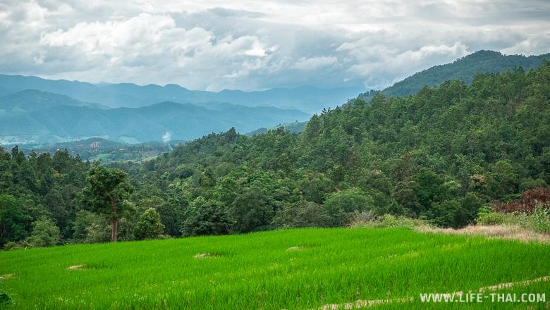 Рисовые террасы около Чиангмая: как добраться и особенности дороги