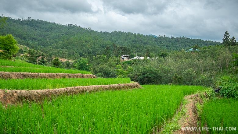 Рисовые террасы около Чиангмая