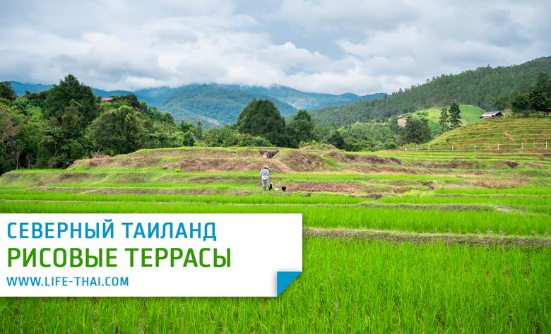 Рисовые террасы рядом с Чиангмаем. Фото, карта, маршрут, как добратаься