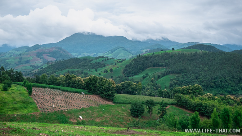 Распаханные склоны гор в нац. парке Дой Интанон