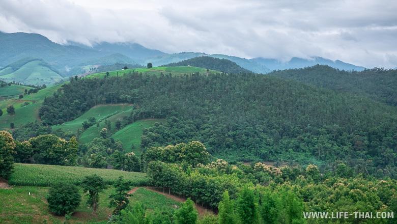 Кукурузные поля на склонах гор в Таиланде