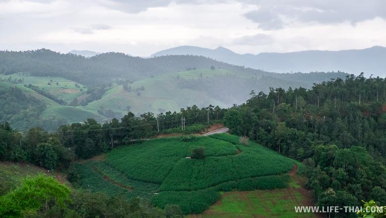 Кукурузные поля и дождь