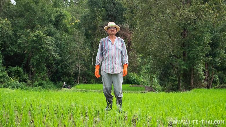 Познакомились с тайским фермером на рисовых полях