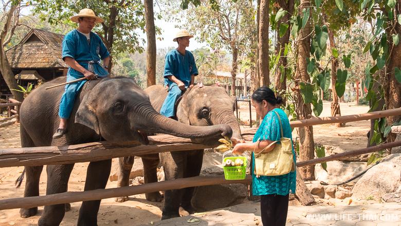 Кормление слонов в заповеднике в Таиланде