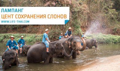 Центр сохранения слонов в Таиланде