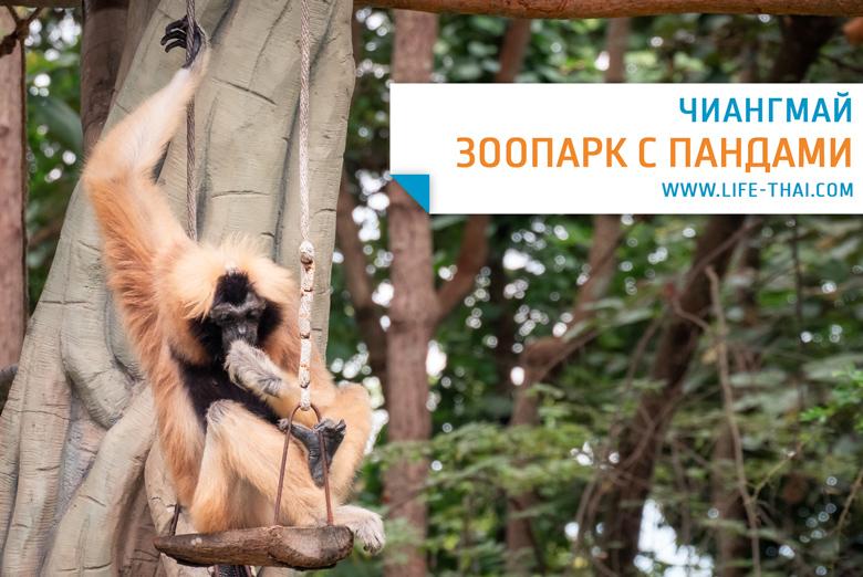 Зоопарк в Чингмае - где увидеть панд в Таиланде