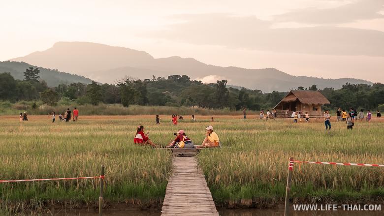 Где рисовые поля в Чиангмае