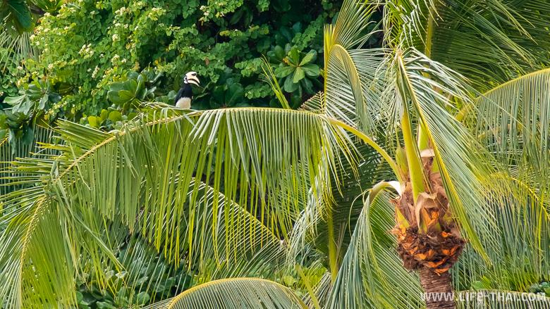 Тукан на пальме на тайском острове Нгай