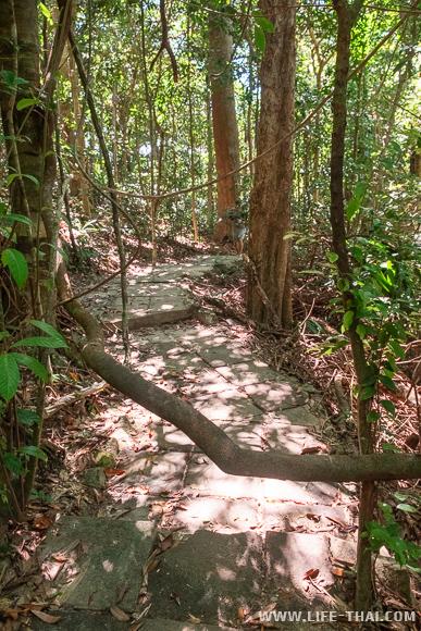 Природная тропа в национальном парке ко Ланта