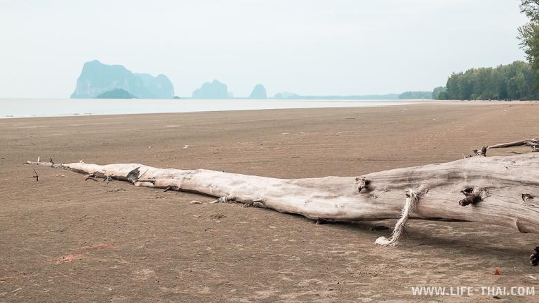 Сухое дерево на пляже Йонг Линг