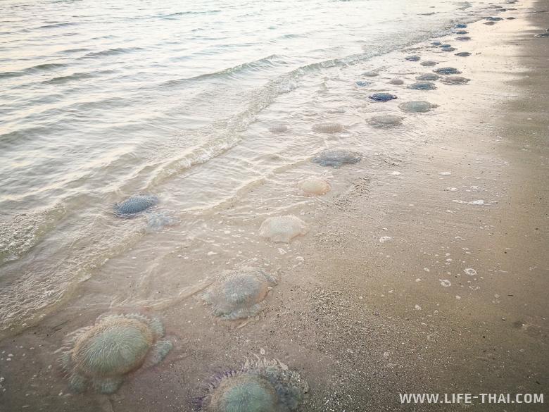 Медузы на пляжах Хуа Хина