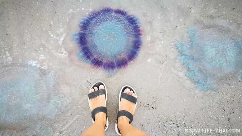 Медузы в Хуа Хине