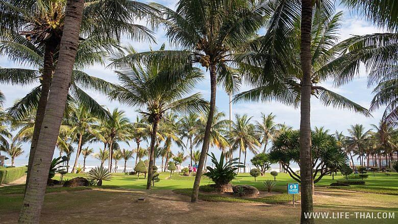 Пальмы на набережной Дананга