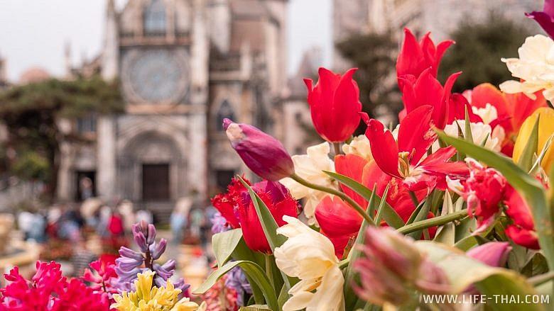 Цветы в Бана Хиллс