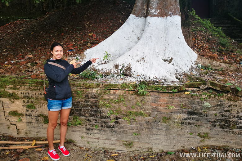 Во Вьетнаме белят деревья