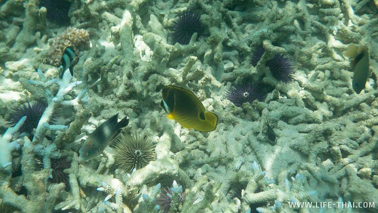 Подводный мир на Маврикии