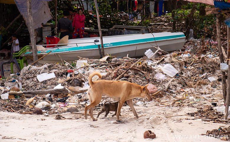 Грязь и мусор на пляже Sao beach на Фукуоке