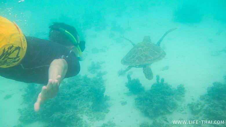 Игорь плывёт за морской черепахой на Маврикии