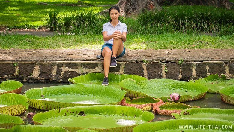 Гигантские водные лилии на острове Маврикий