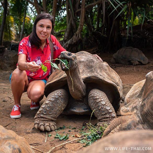 Гигантские черепахи на Маврикии