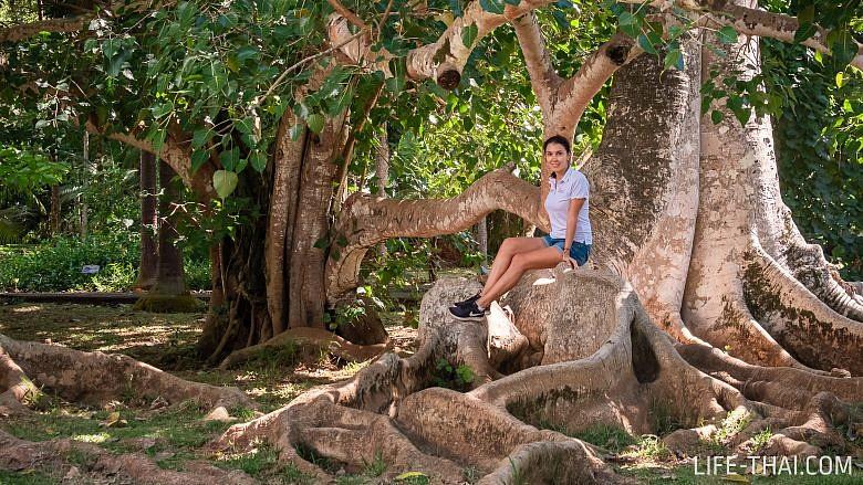 Поездка в ботанический сад Памплемус. Фото и отзыв