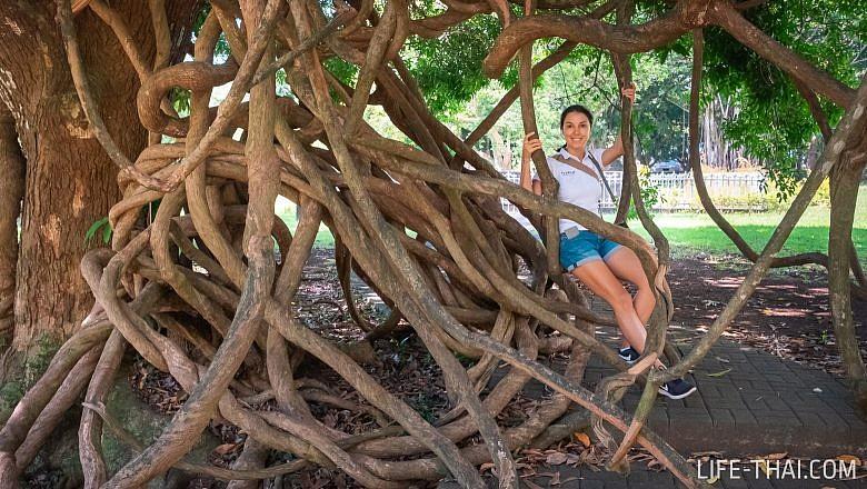 Ботанический сад на Маврикии