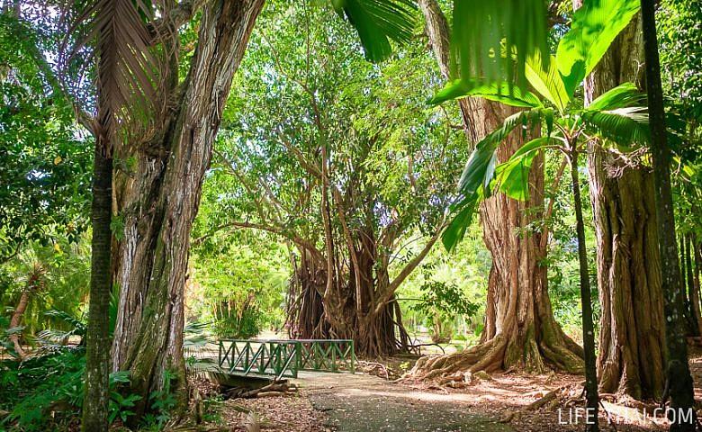 Отзыв о ботаническом саде имени сэра Сивусагура Рамгулама