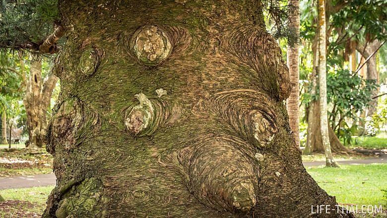 Отзыв о посещении ботанического сада Памплемус на Маврикии