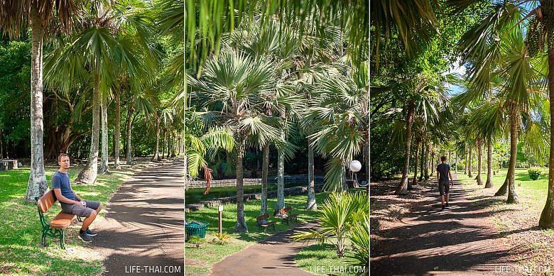 Прогулка по ботаническому саду в Памплемусе