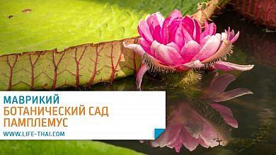 Отзыв о поездке в ботанический сад Памплемус на Маврикии
