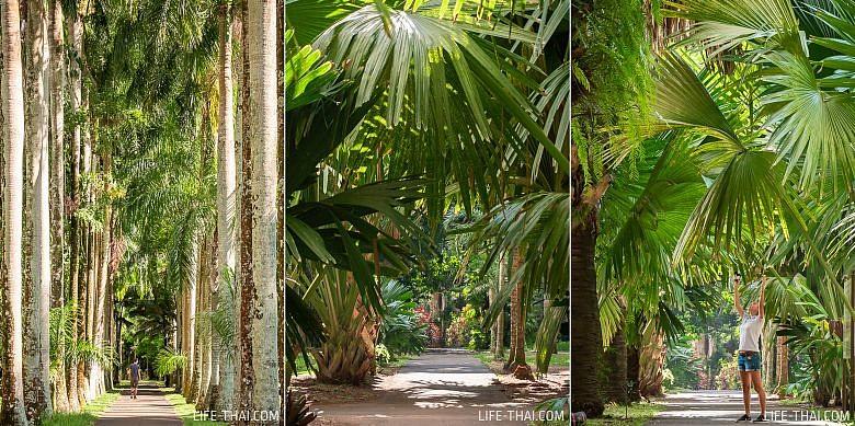 Пальмы в саду Памплемус