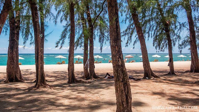 Казуариновые деревья на пляжах Маврикия