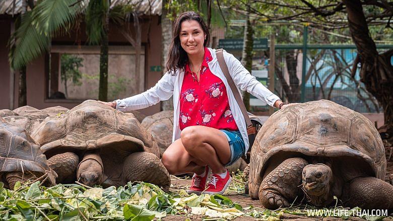 Где увидеть гигантских черепах на Маврикии