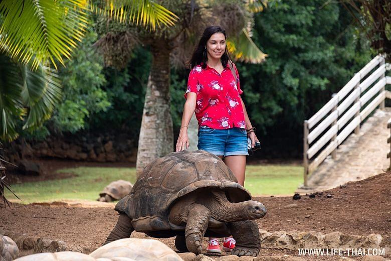 Где на Маврикии посмотреть гигантских черепах