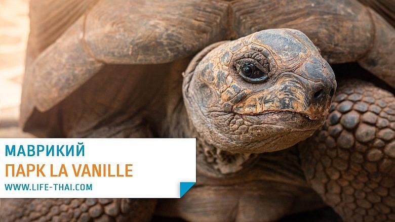 Парк La Vanille на Маврикии - гигантские черепахи и крокодилы