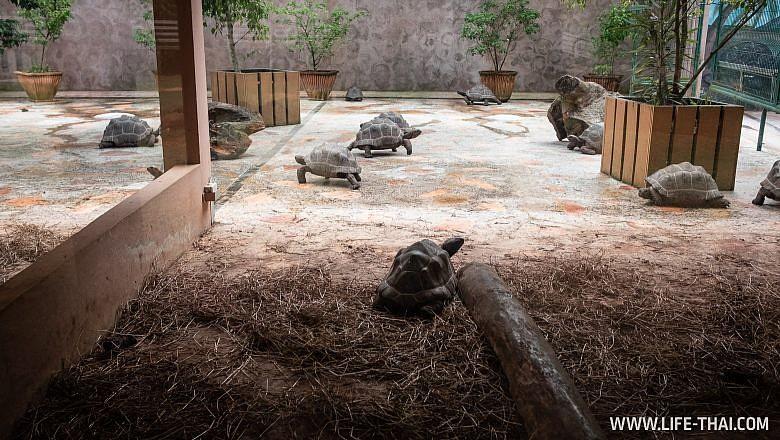 Черепахи на Маврикии