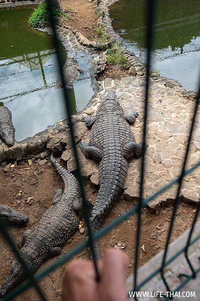 Крокодилы в парке La Vanille, Маврикий