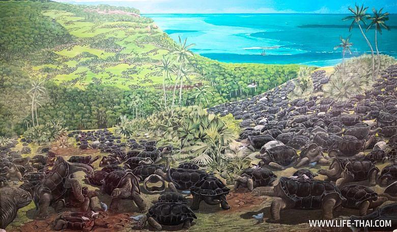 Колония черепах на острове Альдабра