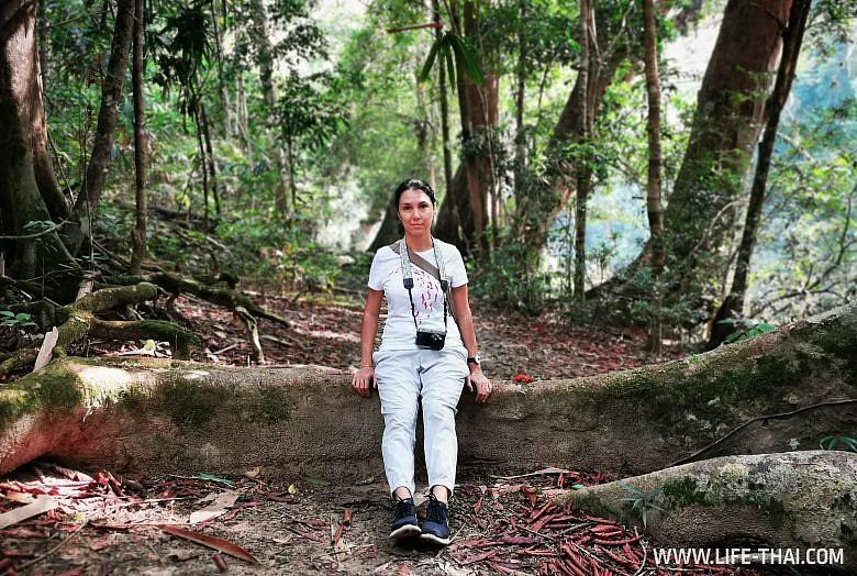 Нац. парк Taman Negara в Малайзии