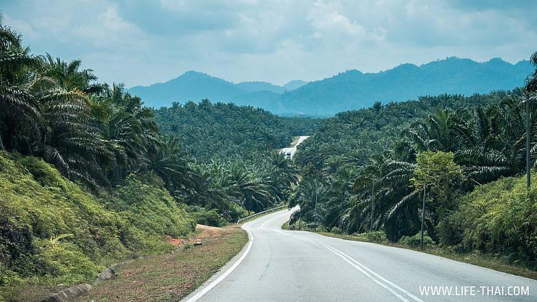 Дорога в нац. парк Таман Негара, Малайзия