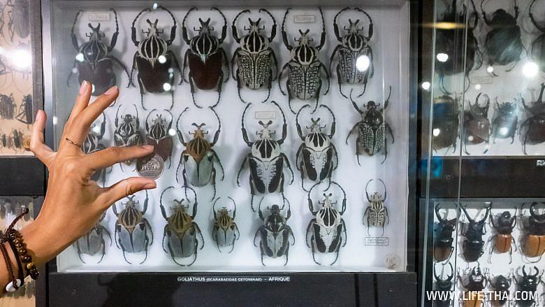 Музей насекомых на Маврикии