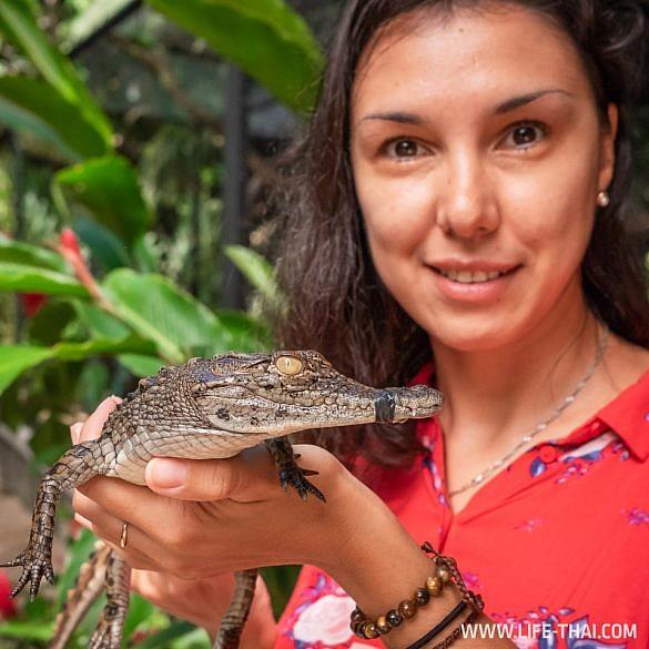 Крокодилы на Маврикии в парке La Vanille