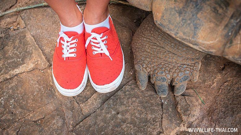 Лапа гигантской черепахи в парке La Vanille, Маврикий