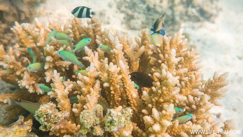 Каких рыб можно увидеть на Маврикии