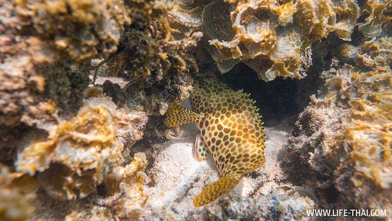 Рыбы Маврикия